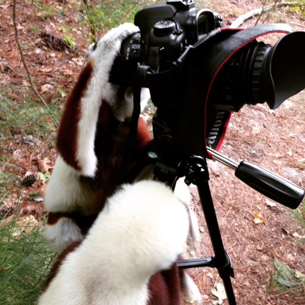 Sifaka camera unit at the Duke Lemur Center